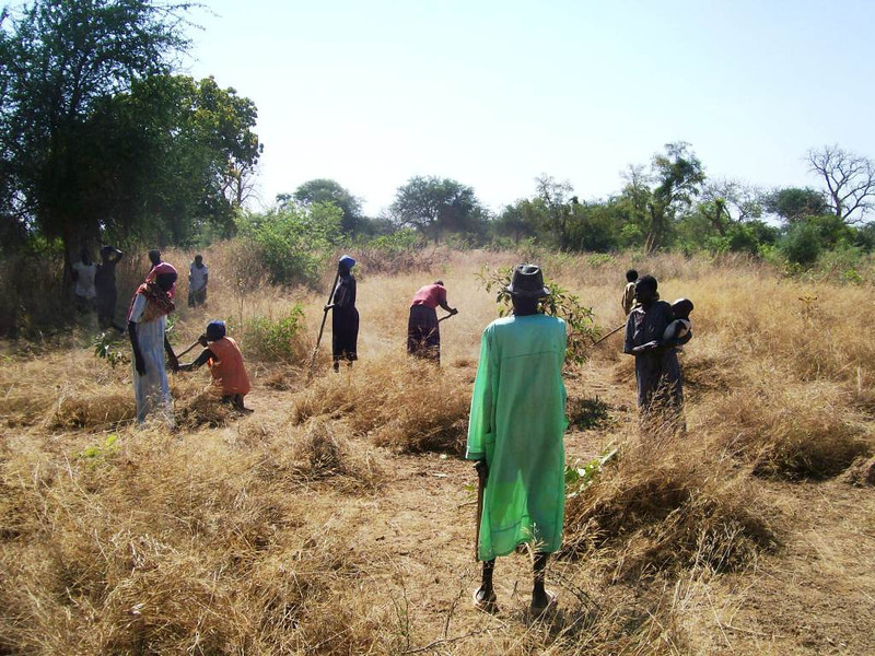 Clearing land to be used for small-scale agriculture programs.