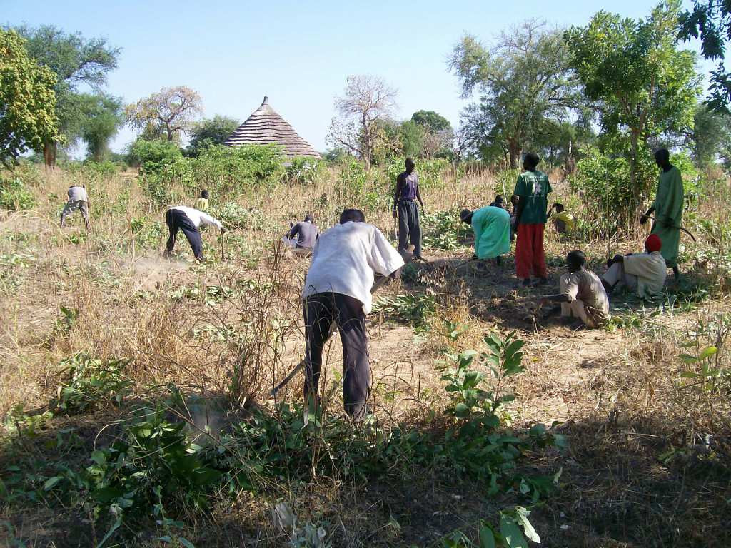 Workers clear the land to be used for demonstration vegetable gardens.