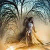 The tree of wisdome
