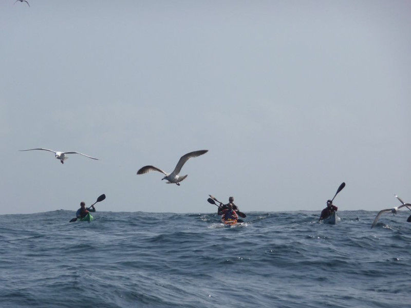 Only gulls and 4 metre Atlantic Swell for company as we paddle off Lands End to the Isles of Scilly