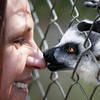 Lemur kiss