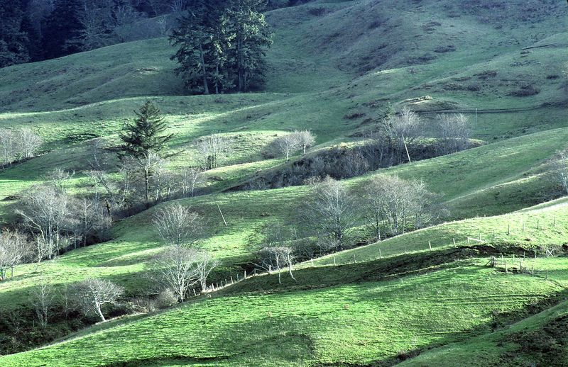 Pastures, Humboldt County Coast, California