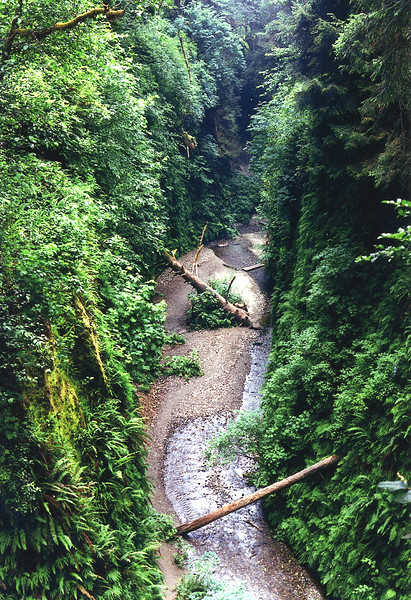 Fern Canyon, Prairie Creek State Park, California