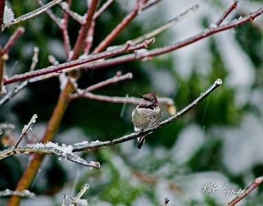 Winter-54-11x14