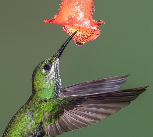 Nectar Harvest