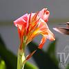 hummingbird finds a flowery treat.