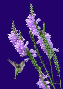 Hummingbird # 6832 ( 5X7 ) B
