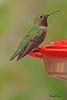 A Black-chinned Hummingbird taken Aug 11, 2010 near Denver, CO.