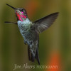 Soft focus on this Hummingbird.  A real show off.  Thanks to Roy Dunn of roydunnphotography.com for helping me get the shot.