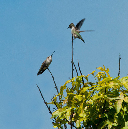 More hummers <br /> 9/12/12