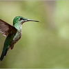 Green-crowneded Brilliant
