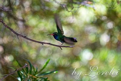 Whimsical Flight
