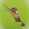 Hummingbird Sun Salute