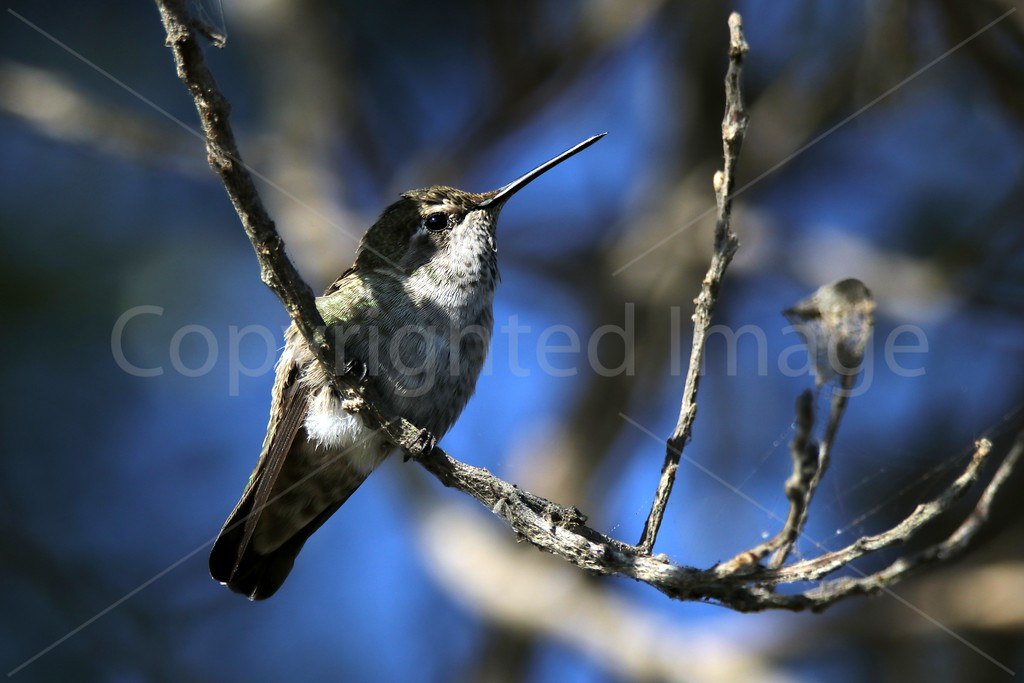 Hummingbird Cradle