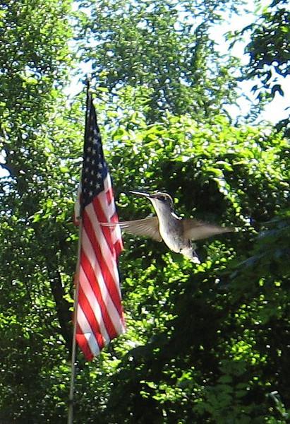 American Flag and a Hummingbird.