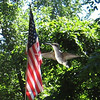 American Flag and a Hummingbird.