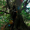 Death Eater Tree