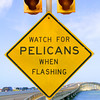 Pelicans Are the Worst Drivers
