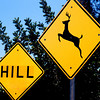 Deer Jumped Over Hill