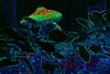 Psychedelic Mushroom<br /> <br /> July 21, 2006<br /> <br /> Baltimore, MD