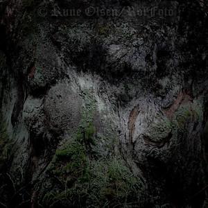 Gammelskogens værbitte ansikt
