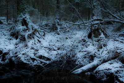 Mørke og kalde dager i trollskogen