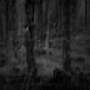 Forhekset skog