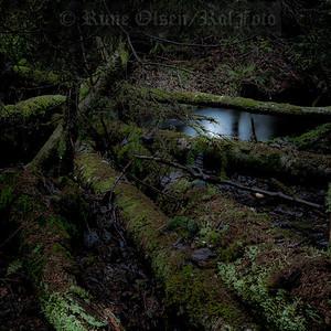 Den mosegrodde gravplass