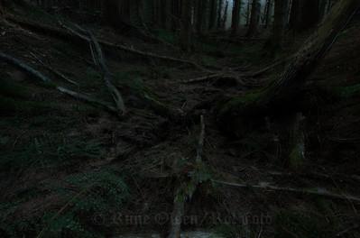 Dysterskogen