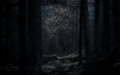 Myrkskog