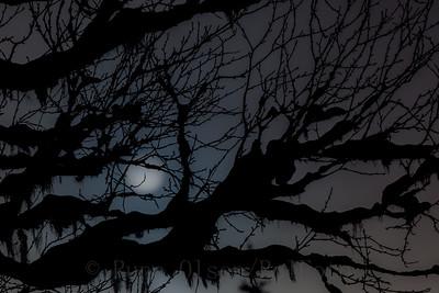 Mørkets lange armer