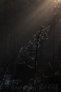 Bundet sammen i mørketida