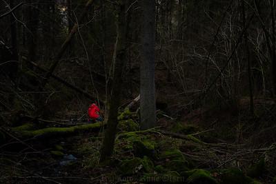På vei inn i trollskogen