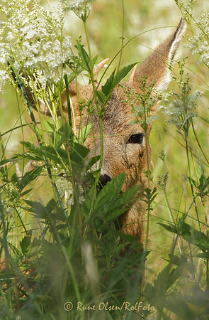 Spionen i gresset
