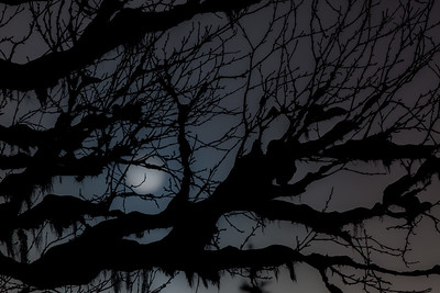 Branches of darkness