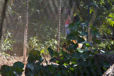 Nice picture of a chain link fence ;o)