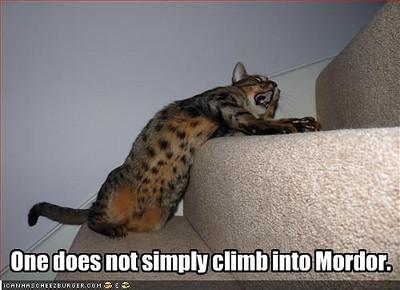 Cat Climb into Mordor