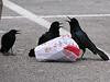 You deserve a beak today