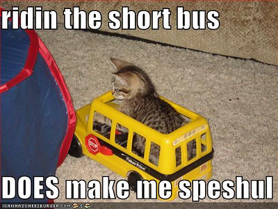 short_bus_cat