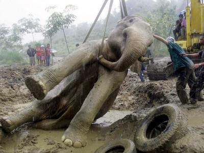 better elephant