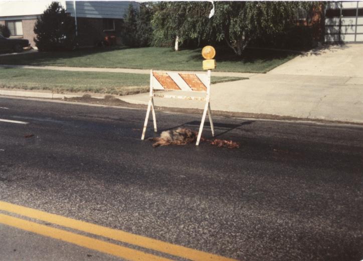 Dead Dog on Denver street