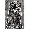 Scary Dog!!