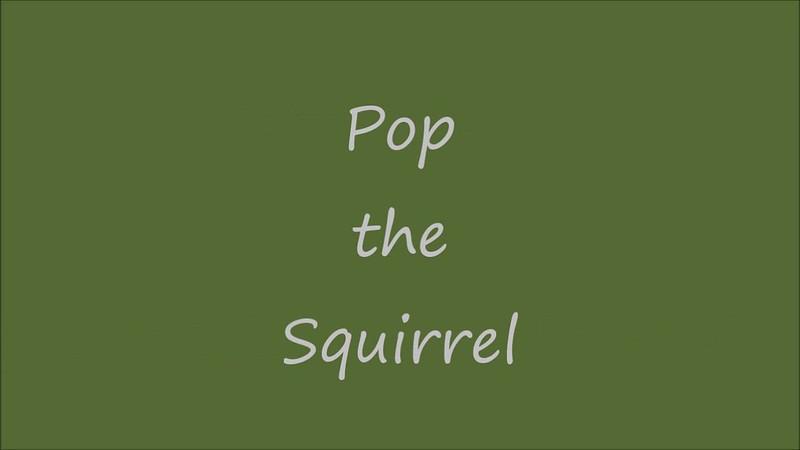 Pop,  the swamp squirrel