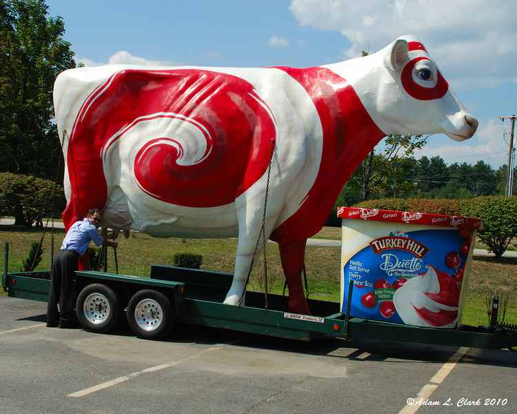 Tim going for milk from the Turkey Hill cow