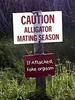 Alligator Mating Season