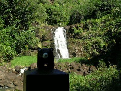 Here is our boy posing in front of Waimea falls.  You are allowed to swim in the pool, but it does warn you of the odd nasty parasite lurking in there, Freddie is a smart bear and decided he prefers to swim in the ocean.