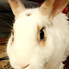 Buddy the Bunny!