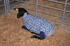 High fashion for sheep at the Solano County Fair.