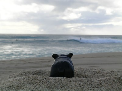 Freddie bear took a trip to the leeward side of the island this weekend.  The island is only 26 miles wide but since he got stuck in traffic on the Farrington highway he could have made it from Edmonton to Red Deer in that amount of time.  Here is Fred is Fred standing on a mound of Sand looking at the surfers on Makaha beach.  To see more pics of the surf at that beach check our travel gallery.  But this is Fred's gallery and he can only stare in envy at the surfers since the surf was pretty high and he is only a begginer at the sport. The waves were not nearly as high as they get a little later on in the year when they hold World Class surfing conditions.  When the surf gets higher than that they hold an Eddie would go or and Eddie Aikau (pronounced I Koa.  He will tell you more about that when he sees one.  Or google Eddie Aikau to learn why Freddie is so fascinated by him.