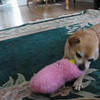 Simple pleasures in a chew toy. Click center of picture to view video.
